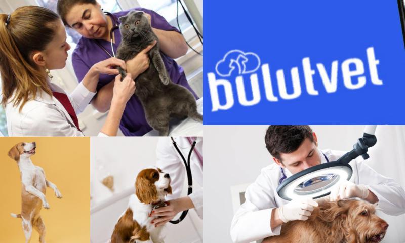 Veteriner Aşı Takip Sistemi Ne İşe Yarar