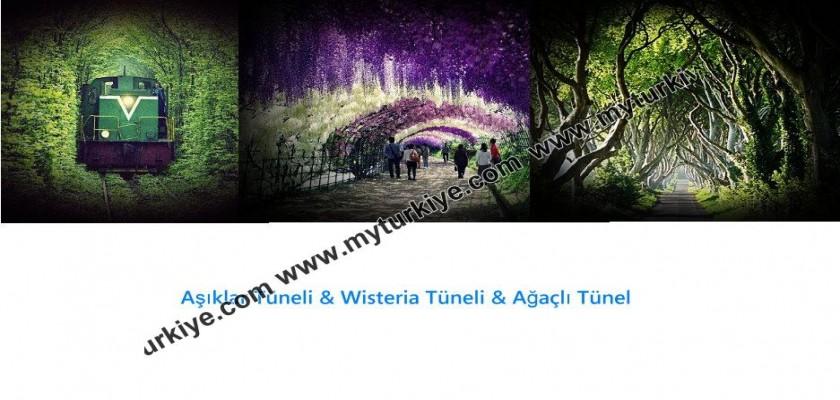 Dünyanın En Romantik Tünelleri